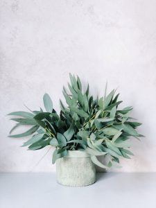Fall Health…  Facial Steam with Eucalyptus Oil to the Rescue!
