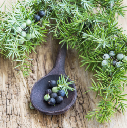 Juniper Berry Beauty Secrets